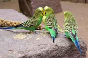 animal world animals avian beaks